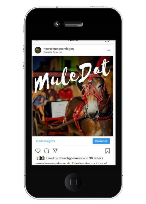 Royal Carriages Social Media