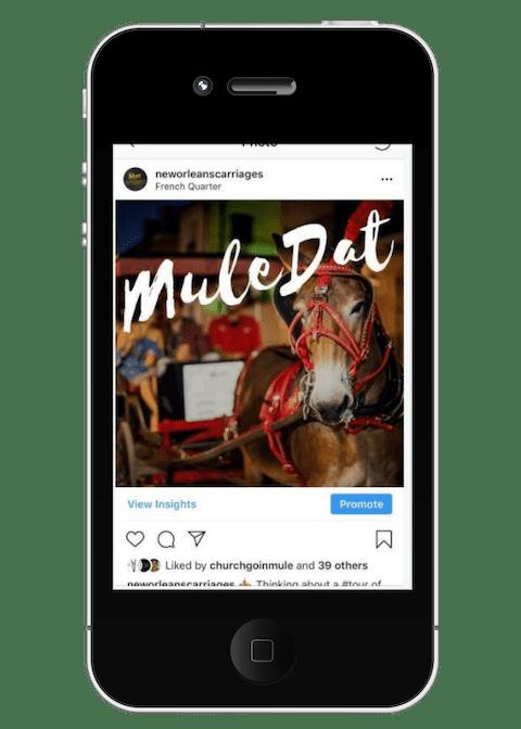 Royal Carriages Social Media